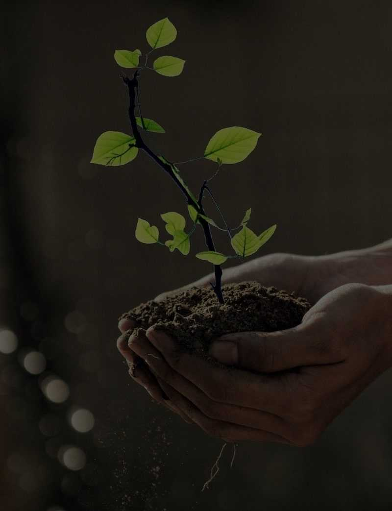 A tree sapling in dirt being held in someone's hands representing Alliance Disposal's plant a tree program.